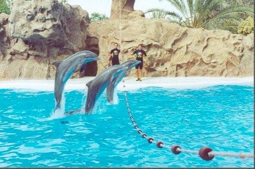 El primer parque Acuático interactivo con delfines (Panama)