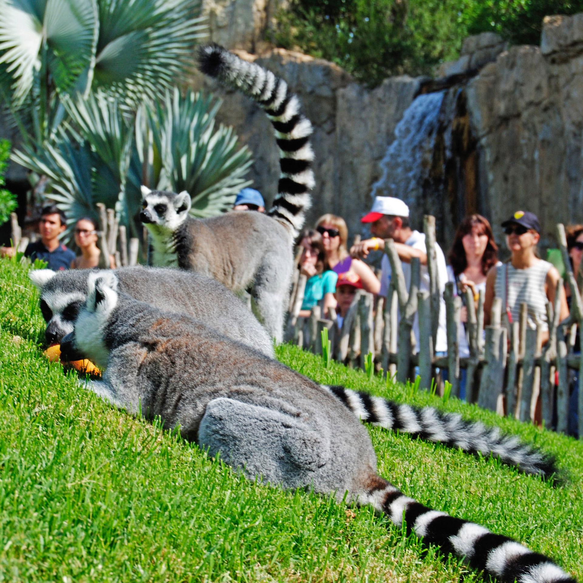 Diseño y construcción Zoológico