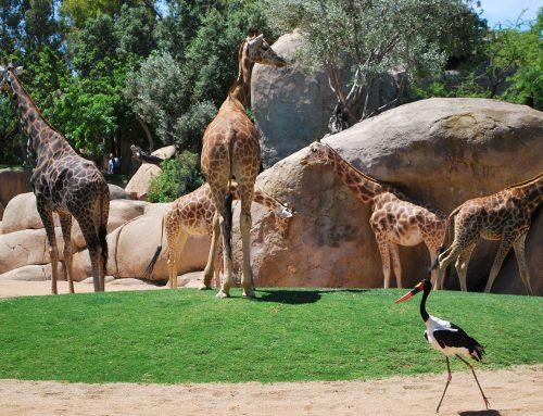 De los zoológicos más antiguos del mundo a los de hoy (+GALERÍA)