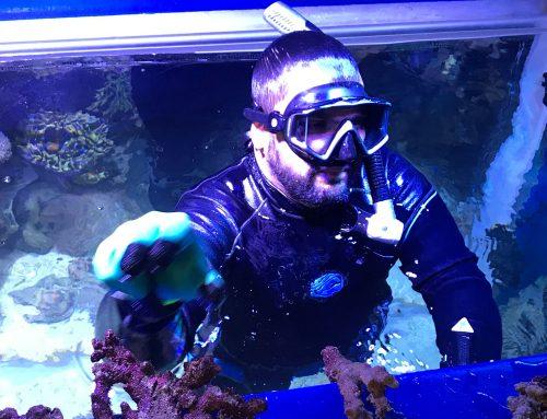 Manuel Romeo, acuarista principal en Oman Aquarium