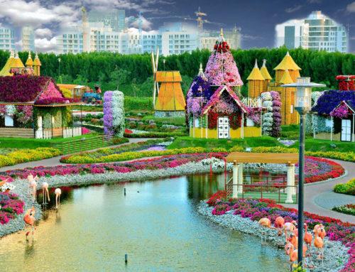 El parque de flores naturales más grande del mundo: Dubai Miracle Garden